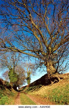 English Countryside. - Stock Image English Countryside, Country Roads, Stock Photos, Amazing, Plants, Image, Plant, Planets