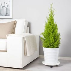 Shop for Furniture, Home Accessories & Ikea Family, Decoration Plante, Pot Plante, Floor Chair, Home Accessories, Planter Pots, Furniture, Home Decor, Fast Growing