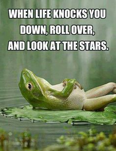 Wise words from an amusing amphibian.