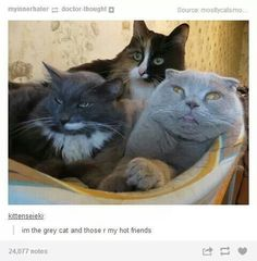21 Times Tumblr Told The Truth About Cats