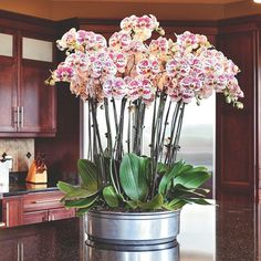 Explore these stunning and beautiful Phalaenopsis orchid arrangements. Find a wide range of exciting orchid arrangement ideas that includes potting your orchids in antiques, birdcages and much more! Arrangements Ikebana, Orchid Flower Arrangements, Orchid Planters, Orchids Garden, Orchid Terrarium, Fall Planters, Terrariums, Orchid Plant Care, Orquideas Cymbidium