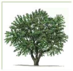 olive_tree_logo.jpg 313×303 pixels