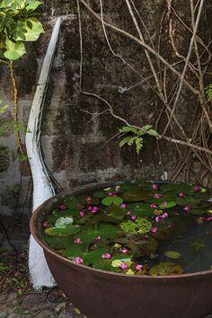 Garden - A lily-pad filled water feature in a quiet corner