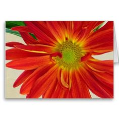 Flower Greeting Card Customizable.  Add your own message to the inside of this floral greeting card to add that special touch.