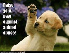 raise your paw against animal abuse