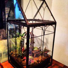 Wardian Case terrarium Terrarium Stand, Terrariums, Fairy Gardens, Aquarium, Cases, Design, Home Decor, Miniature Houses, Miniatures