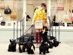 Scottish Terriers take part in Radley PR stunt