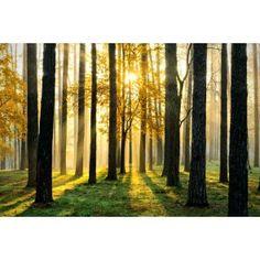 Fotomural bosque dorado