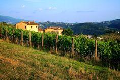 Beleef uw vakantie Italië, in een Toscane agriturismo. Tritt, casa in Toscana is de agriturismo Toscane specialist.