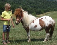 Peanut's Contact Info  #miniature #horse    Olive Branch Animal Rescue Refuge Inc., Sistersville, WV        304-652-1010      Email Olive Branch Animal Rescue Refuge Inc.      See more pets from Olive Branch Animal Rescue Refuge Inc.      For more information, visit Olive Branch Animal Rescue Refuge Inc.'s Web site.