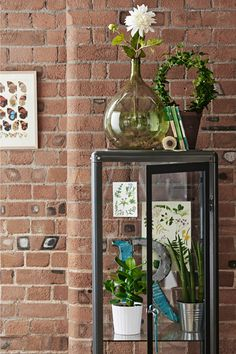 View of FABRIKÖR glass cabinet in dark grey filled with plant pots, botanical prints. Exposed brick wall in background.