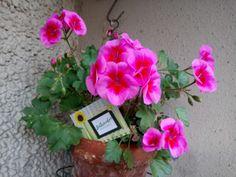 Mikor tehetjük ki a teleltetett növényeket a szabadba? Floral Wreath, Wreaths, Home Decor, Gardening, Homemade Home Decor, Door Wreaths, Garten, Deco Mesh Wreaths, Garlands