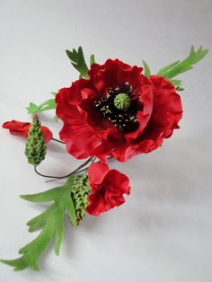 {Striking red Poppies by Jeanette}