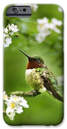 Fauna and Flora - Hummingbird with Flowers iPhone 6 Case by Christina Rollo.  Protect your iPhone 6 with an impact-resistant, slim-profile, hard-shell case.  The image is printed directly onto the case and wrapped around the edges for a beautiful presentation.  Simply snap the case onto your iPhone 6 for instant protection and direct access to all of the phones features!