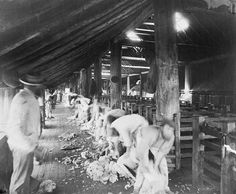 Shearing Shed outside Melbourne. Photograph Charles Nettleton, circa Currently in Currie Collection, State Library of Victoria Shearing, My Land, Australian Artists, Art History, Melbourne, The Outsiders, Victoria, Concert, Photograph
