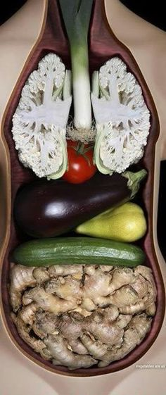 The Importance of Vitamin in a Vegetarian Diet. It's something we become aware of all the time: individuals, in general, do not eat healthy. The average diet plan includes too much hydrogenated fat and b Anatomy Models, Vegetarian Lifestyle, Healthy Lifestyle, Body Organs, Weird Food, What You Eat, Food Art, Veggies, Healthy Vegetables