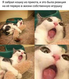 Things that make you go AWW! Like puppies, bunnies, babies, and so on. A place for really cute pictures and videos! Cute Cats, Funny Cats, Funny Animals, Cute Animals, Animal Pictures, Cute Pictures, Best Memes, Funny Memes, Russian Jokes