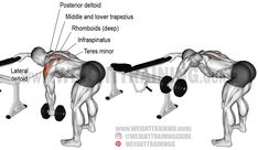 One-arm dumbbell bent-over lateral raise exercise. fitness trainer tips Good Back Workouts, Chest Workouts, Back Exercises, Fun Workouts, Shoulder Exercises, Gym Workout Tips, Plank Workout, Dumbbell Workout, Trapezius Workout