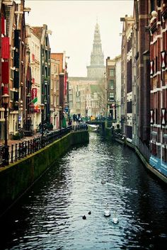 Amsterdam Beauty