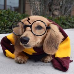 From @dogsloversclub and @somethingaboutbrady #dog #dogs #dogsofinstagram #dogoftheday #doglover #dogstagram #doggy #doglovers #doglife #dogsoninstagram #dogtraining #dogslife #dogwalking #dogsarefamily #dogsloversclub #woof #bestwoof #mydog #ilovedogs #dogs_of_instagram #puppies #puppy #instapuppy #pup #lovedogs #dogstagram #instadogs #pets #animal #pet