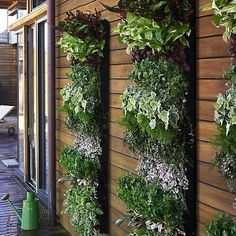 Vertical Garden...  pretty, pretty...  love the rows of contrasting colors