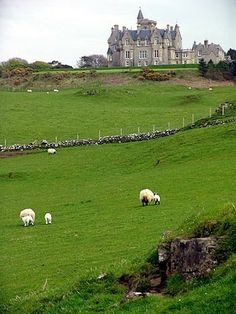Glengorm Castle , Isle of Mull, Scotland by Steve Deger Oh The Places You'll Go, Places To Travel, Places To Visit, Beautiful Castles, Beautiful Places, Palaces, Scottish Castles, England And Scotland, Scotland Uk