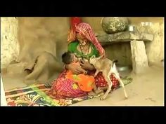 woman in india breastfeeding animal