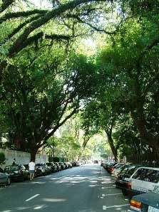 Avenida Higienópolis  (the picture is small, but is the only one that I could find here that make justice)