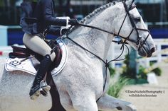 Hoof prints in my Heart | willslideforchocolate: Devon horse show 2015