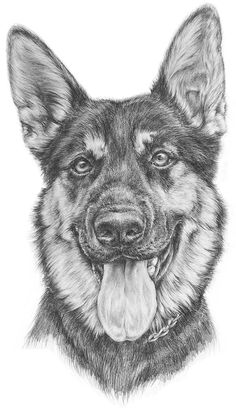 How You Can Attend Dog Drawings With Minimal Budget Pencil Sketches Of Animals, Dog Pencil Drawing, Cute Dog Drawing, Realistic Animal Drawings, Cool Art Drawings, Dog Drawings, Sketches Of Dogs, Dog Paintings, Dog Portraits