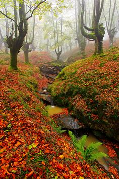 Fall in misty Basque forest, Spain