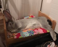 I want one of these beds for my bun!!!