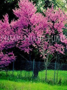 Photography Spring Summer Flowers Tree