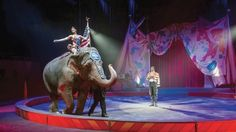 """News today 14 January 2017: Ringling Bros """"The Greatest Show on Earth"""" is closing forever after 146 years. The Feld family who own the circus have said that """"their existing animals - lions, tigers, camels, donkeys, alpacas, kangaroos and llamas - will go to suitable homes."""""""