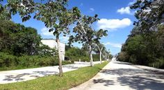 Another street framed by trees at El Cielo Residencial. Playa del Carmen real estate.