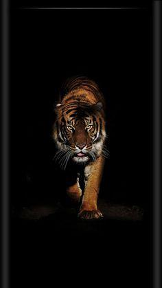 48 ideas for tattoo animal nature big cats Wild Animal Wallpaper, Tiger Wallpaper, Beautiful Cats, Animals Beautiful, Animals And Pets, Cute Animals, Tiger Artwork, Tableau Pop Art, Tiger Pictures