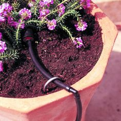How to set up drip watering for container gardens from Sunset Magazine.