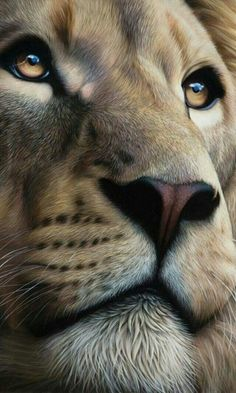 Amazing Lion drawing or painting. Lion of Judah Prophetic art. This is so beautiful! Look at those eyes! Lion And Lioness, Lion Of Judah, Lion King Art, Lion Art, Nature Animals, Animals And Pets, Cute Animals, Baby Animals, Beautiful Lion