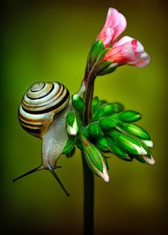 "Snail & Flowers ~ ""The earth has music for those who listen."""