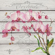 Pink Orchids-JP3925 by Jean Plout