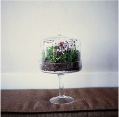 Cake Stand Terrarium | 21 Simple Ideas For Adorable DIY Terrariums
