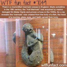 Mummified mermaid corpse - WTF fun facts