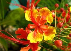 Google Image Result for http://img.ehowcdn.com/article-new/ehow/images/a06/9r/pq/use-tropical-plants-landscaping-800x800.jpg