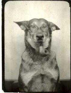 Photobooth Dog (The Professor), vintage photograph, 1944