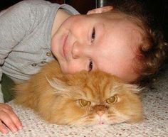 Look at the cats face!