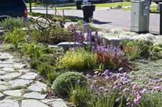 Xeriscape - This front yard near Salt Lake City, Utah, requires minimal watering