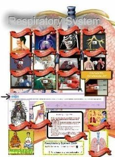 Check out this multimedia poster on the Respiratory System made using Glogster EDU. This site allows you to make interactive, online posters that can include audio, video, and graphics. You could create a Glog on any subject. How could you use Glogster EDU to enhance the understanding of your findings for your next presentation?