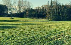 wiese bio.gut südburgenland Vineyard, Outdoor, Landscape, Architecture, Nature, Outdoors, Vine Yard, Vineyard Vines, Outdoor Games