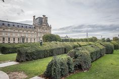 Rows of magnificent hedges in the Tuileries Garden in Paris.