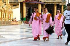 Burmese (pink) Nuns